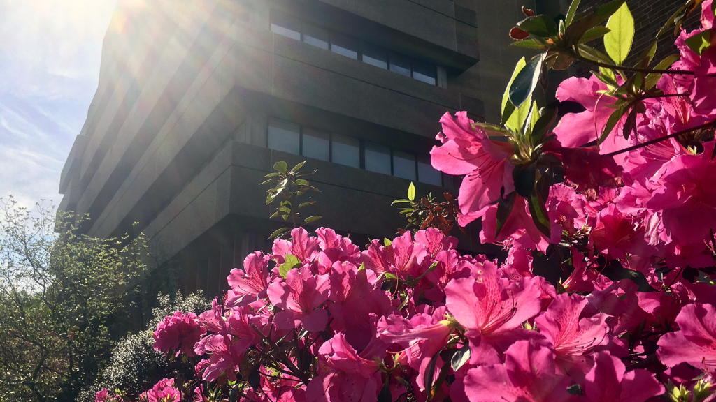 Spring flowers in front of Poe Hall.